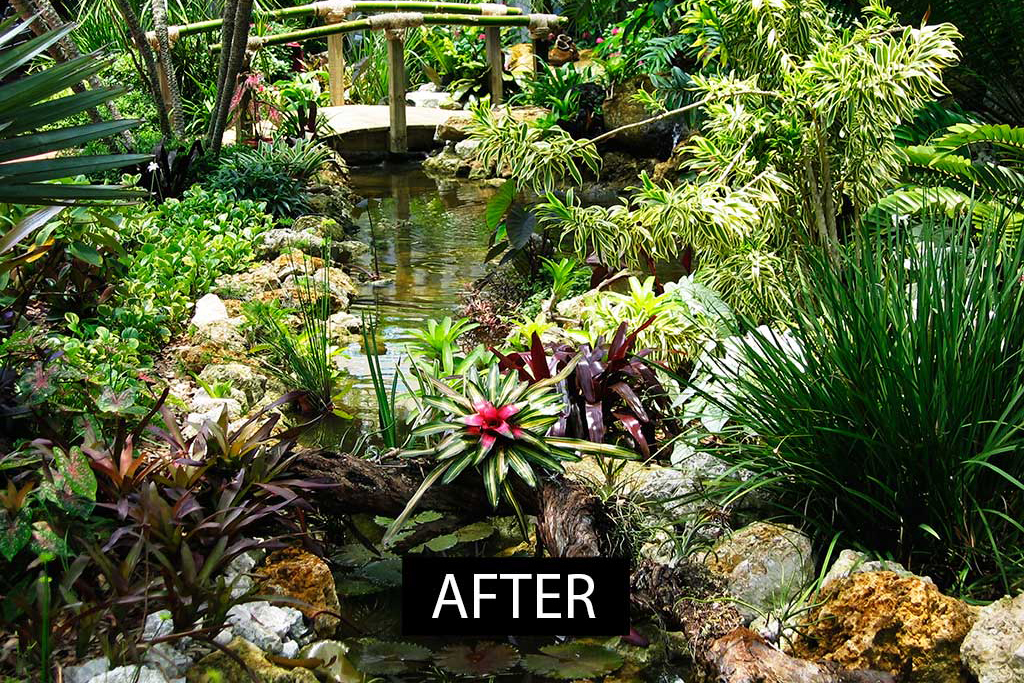 Sarasota Garden club transformation with water features and landscaping designed and built in Sarasota Florida by Lucas Lagoons Inc.